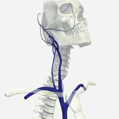 Módulo de simulación procesos basados en la web / de anatomía / de ...