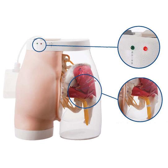Modelo anatómico nalga / de inyección intramuscular ...