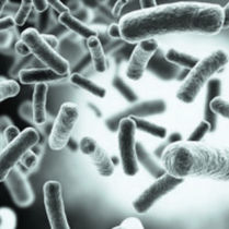 Kit de prueba de herpes / HSV / para ADN / para PCR en tiempo real