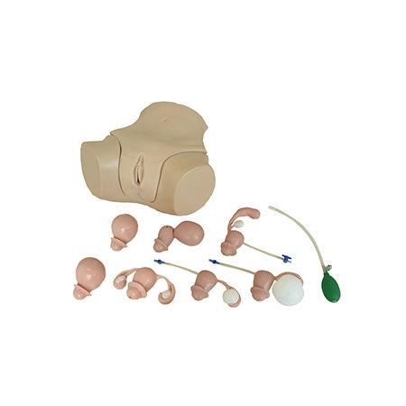 simulador de formación / para cuidados ginecológicos / femenino / pelvis