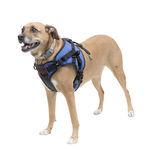 arnés para verticalizador / de marcha / para perros