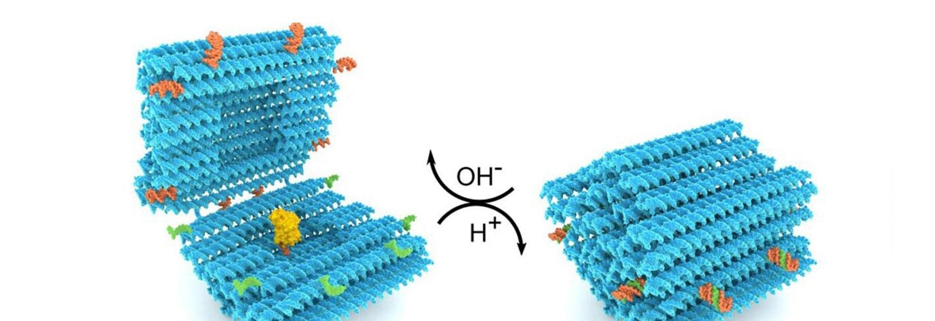 El ADN se pliega en una nanocápsula inteligente para la administración de fármacos