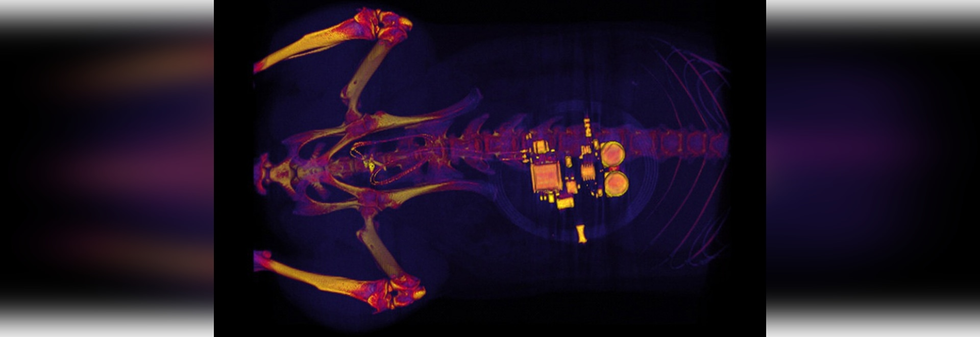 El implante controla la vejiga activa usando luces LED
