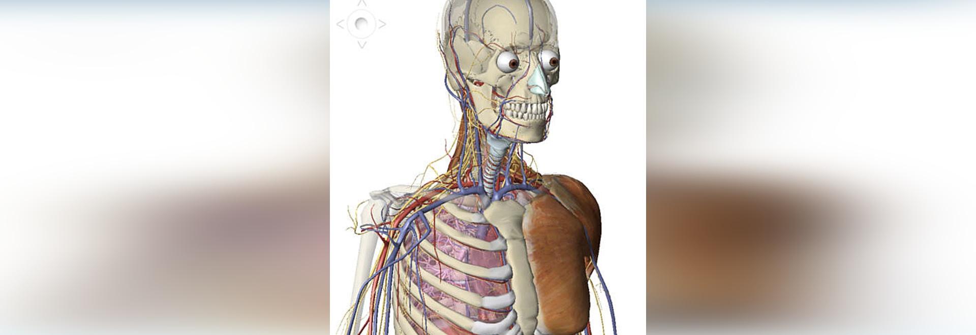 Nuevo: Atlas humano de la anatomía del cuerpo visible por el cuerpo ...