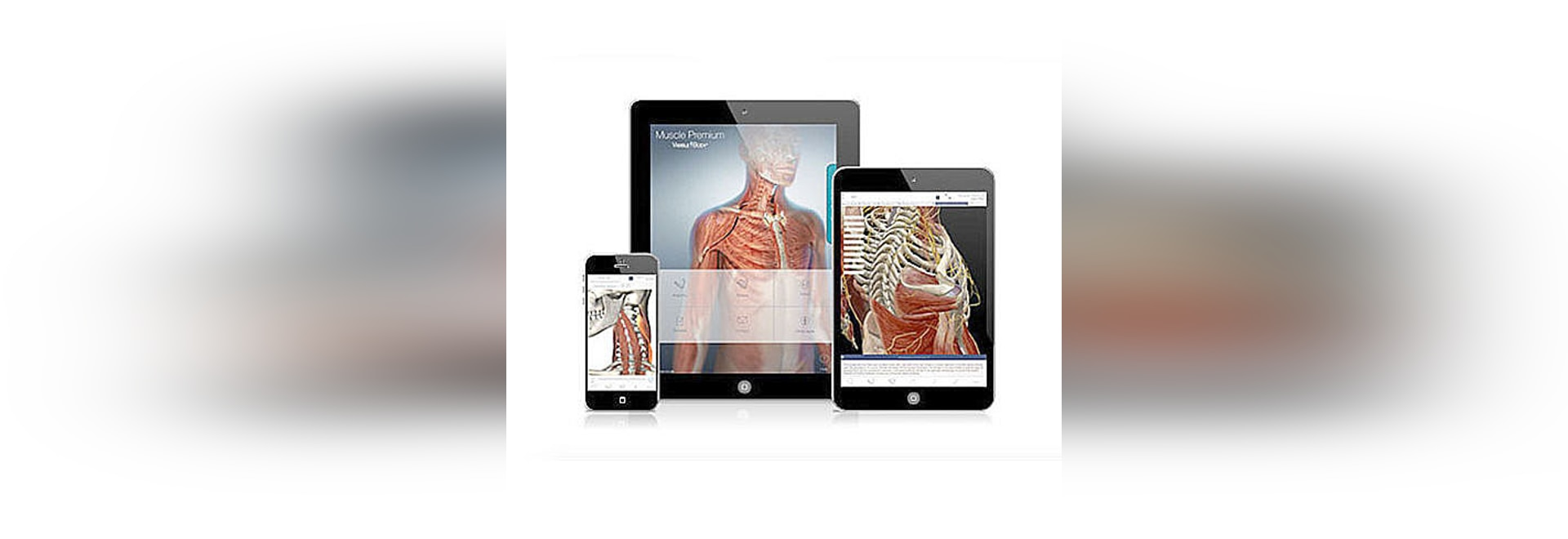 Nuevo: Corazón interactivo y atlas circulatorio por el cuerpo ...