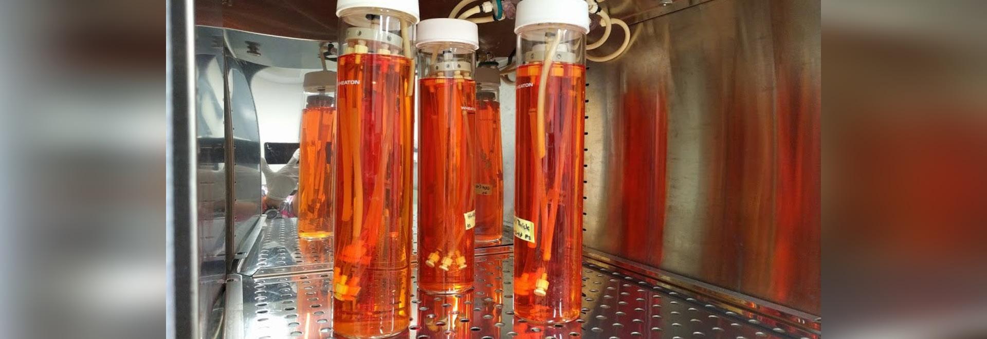 Nuevos reemplazos Tejido-dirigidos del vaso sanguíneo un paso más cercano a ensayos humanos