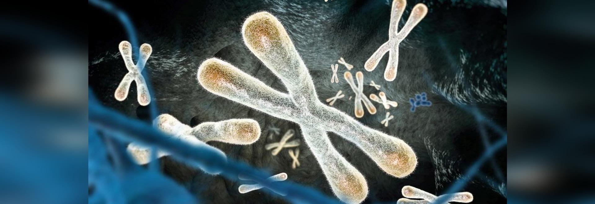 Riesgo de cáncer previsto por longitud del Telomere