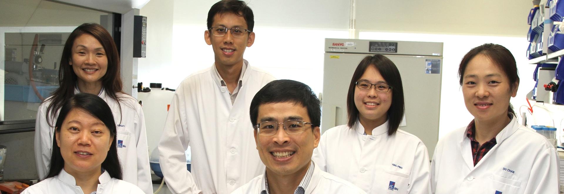 El tejido humano del corazón crecido de las células madres mejora la prueba de la droga
