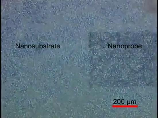 Nanomesh electrónico abraza suavemente las células de derrota del corazón