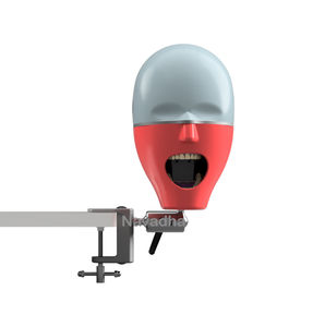 maniquí de prácticas para odontología / cabeza