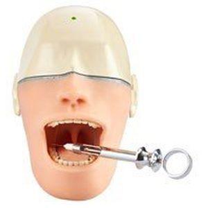 maniquí de prácticas para odontología / de anestesia / cabeza