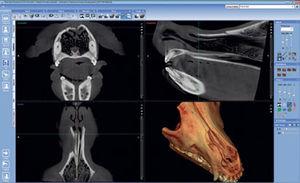 software para imagen dental veterinaria