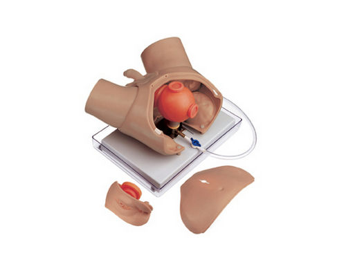 maniquí de prácticas para endoscopia / de reconocimiento pélvico