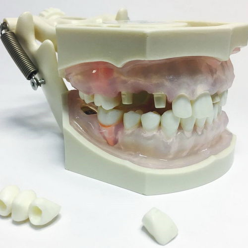 modelo anatómico bucal