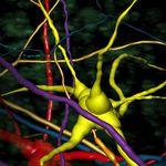 software de análisis / de visualización 3D / de medición / con sistema de seguimiento