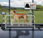 sistema de análisis marcha / veterinario