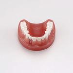 modelo anatómico de dentadura