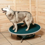 plataforma de equilibrio veterinaria