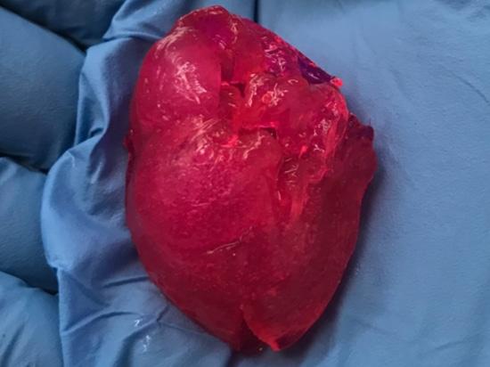 BIOLIFE4D bioprime por primera vez en los EE.UU. el pequeño corazón humano