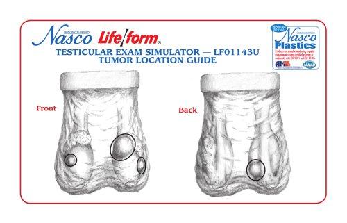 Nasco?s Life/form® Testicular Exam Simulator